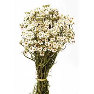 Oxodia stabilisé blanc (40gr)