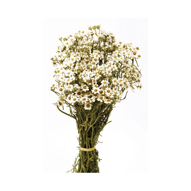 Ixodia stabilisé blanc (40gr)