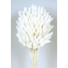 Phalaris séché blanc (env 100gr.)