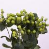 Hypéricum vert (5 tiges) - France Fleurs