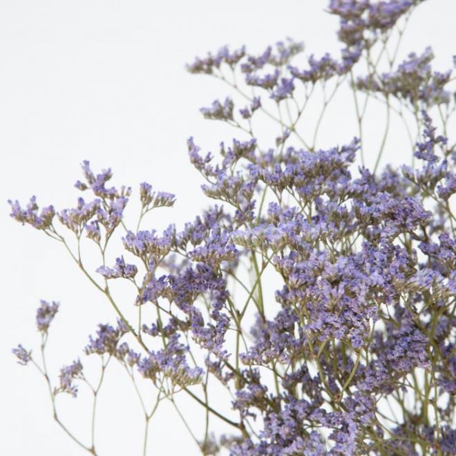 Limonium séché violet (5 tiges)