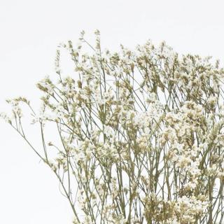Limonium séché blanc (5 tiges)