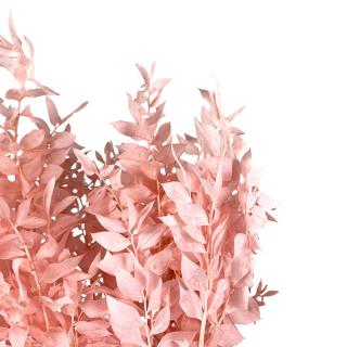 Ruscus stabilisé rose (env 150gr.)