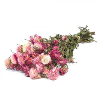 Hélichrysum séché rose tendre (env 100g)