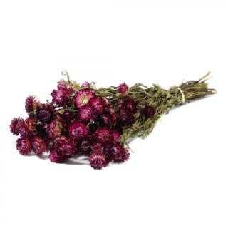 Hélichrysum séché rose foncé (env 80g)