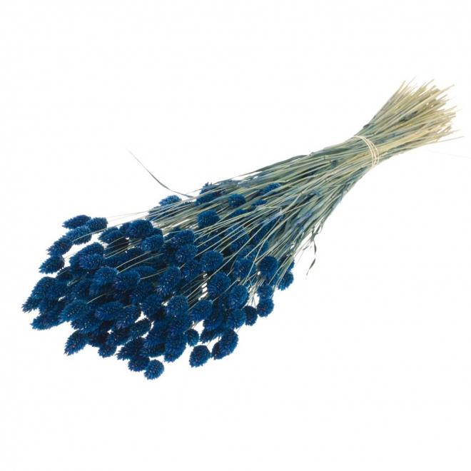 Phalaris séché bleu foncé (env 100gr.)