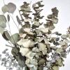 Eucalyptus mix séché (150gr.environ)