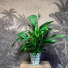 Georges le Spathiphyllum