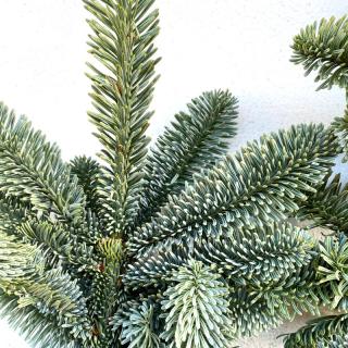 Branches de sapin (3 branches)