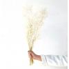 Ruscus stabilisé blanc (env 100gr.)