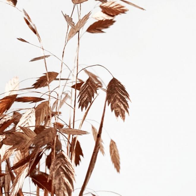 Chasmanthium séché cuivre (10 tiges)