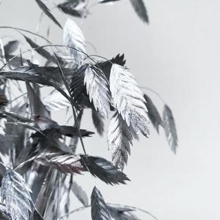 Chasmanthium séché argent (10 tiges)
