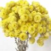 Immortelles jaunes du Var (env 60gr.)