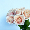 Rose Sweet Avalanche (20 tiges)