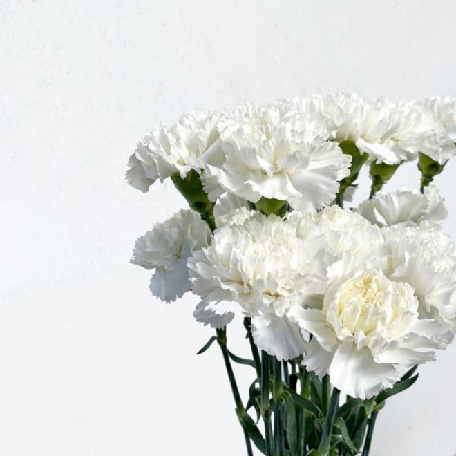 Oeillet sims blanc - France Fleurs