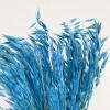 Avoine séchée bleue (botte de 100gr)