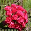 Bouquet de mariée Alice - fuchsia