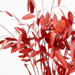 Chasmanthium séché rouge (10 tiges)