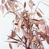 Chasmanthium séché rose (10 tiges)