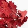 Feuille de chêne stabilisée rouge (env 100gr.)