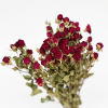 Rose branchue séchée rouge (10 tiges)