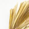 Feuille de palmier XL (1 tige)