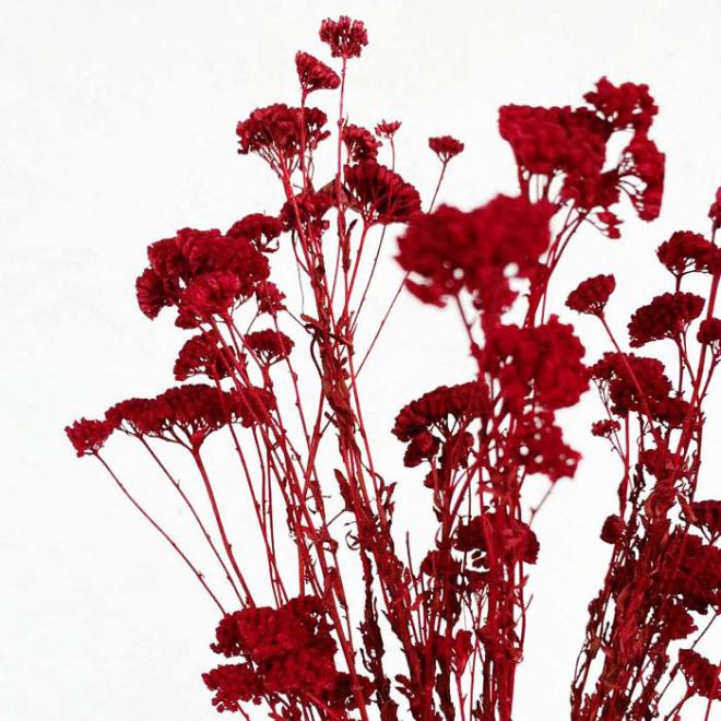Achillée séchée rouge (10 tiges)