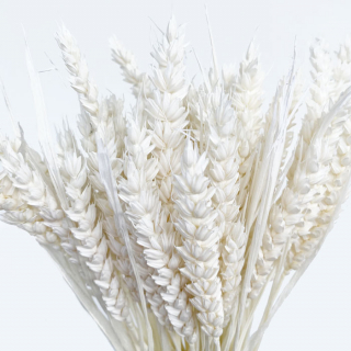 Blé séché blanc (env 100gr.)