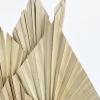 Feuilles de palmier naturelles (4 tiges)