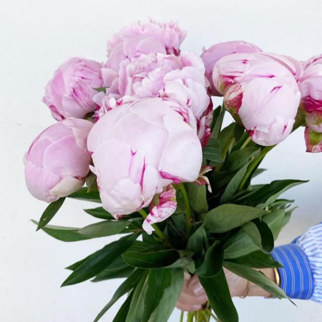 Pivoine rose pâle (10 tiges)