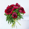 Pivoine rouge(10 tiges)