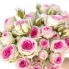 Rose branchue mimi-eden