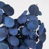 Eucalyptus Populus stabilisé bleu (env 150gr.)