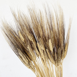 Blé séché brun (env. 200gr)