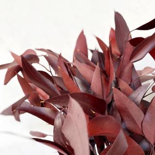 Eucalyptus Nicoli stabilisé rouge (env 150gr.)
