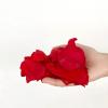 Pétales de roses éternelles rouges