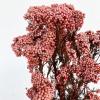 Fleur de riz stabilisée corail (env 100gr.)