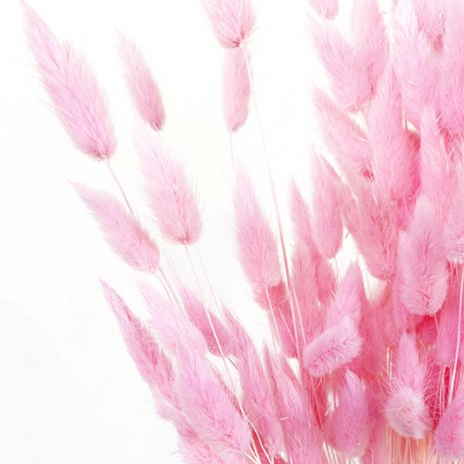 Lagurus Ovatus séché rose (50g.)
