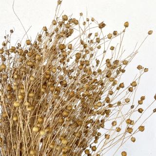 Fleur de lin séché naturelle (env 100gr.)