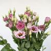 Lisianthus rose - livraison fleurs coupées - France Fleurs