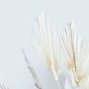 Feuille de palmier ivoire mini (10 tiges)