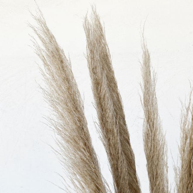Herbe de pampa Épi (5 tiges)