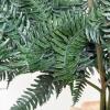 Fougère stabilisée verte (env 200gr.)