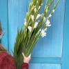 Glaïeuls (10 tiges)  - France Fleurs