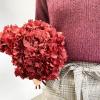 Hortensia stabilisé rouge foncé (env 60gr.)