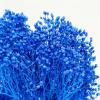 Broom bloom séché bleu nuit (env 100gr.)