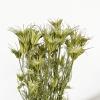 Nigelle orientale séchée naturelle (env 50gr.)