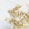 Nigelle orientale séchée blanche (env 70gr.)