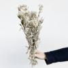 Immortelles séchées blanches (env 40gr.)