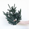 Branche de sapin stabilisée (2 branches)